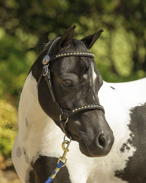 MINIATURE HORSE SMALL PONY NYLON COMPLETE BRIDLE WITH BIT RED